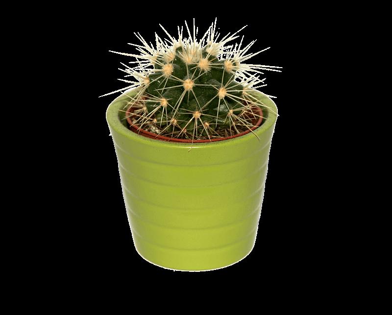 13 - cactus vs konijn